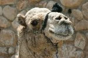 Qumran camel